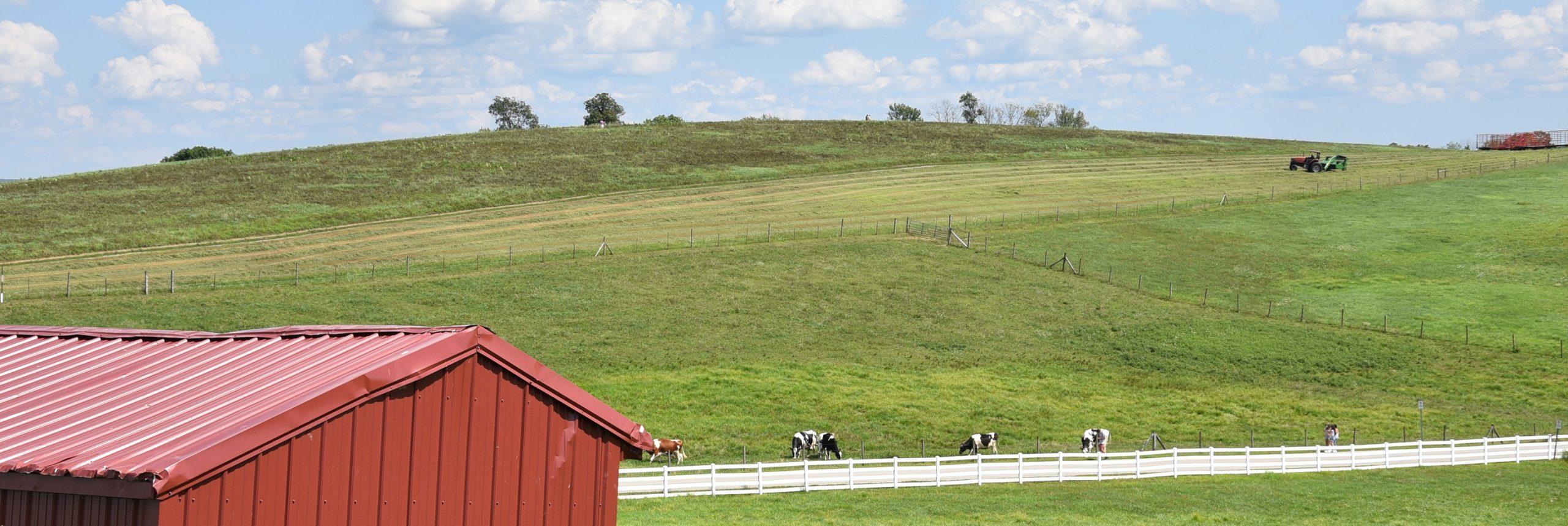 A view of Horsebarn hill
